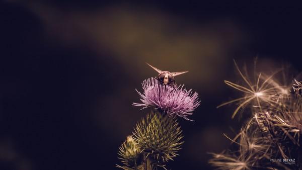 Photographie Botanique